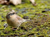 Sibe Accentor_J4X7970