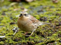 Sibe Accentor_J4X7982