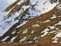 Mountain Hare _M2A3627