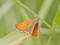 007-essexskipper