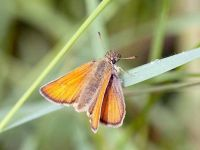 008-essexskipper2
