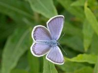 076-silver-studded-blue-male2