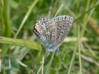 100-common-blue-male