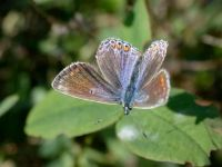 102-common-blue-female-blue-form