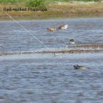 East Coast Waders - 19th August 2012