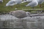 A Gull Masterclass Day - 18th February 2012
