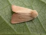 73.137 BF2377 - Fen Wainscot - Noctuidae - Arenostola phragmitidis