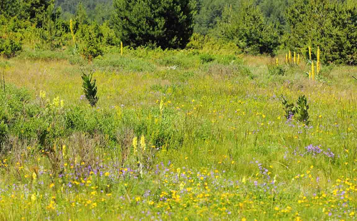 Flower-Rich-meadows-900090