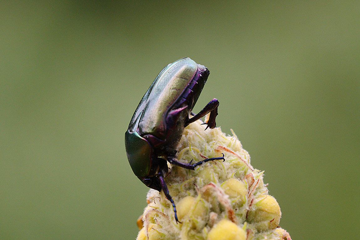 Green Beetle 6860326