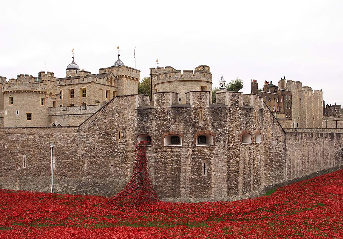 Tower Poppies 1674623