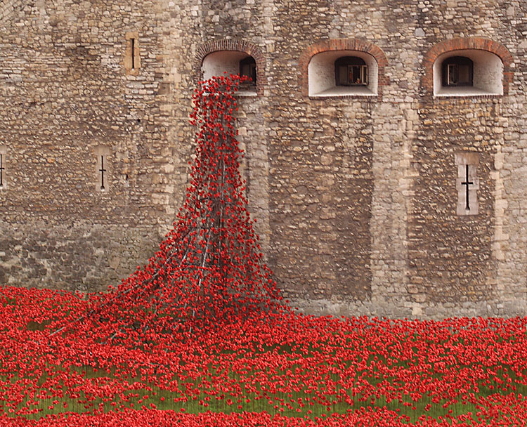 Tower Poppies 1676624