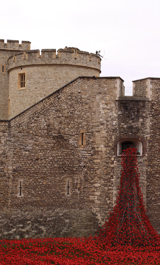 Tower Poppies 1679 HD678
