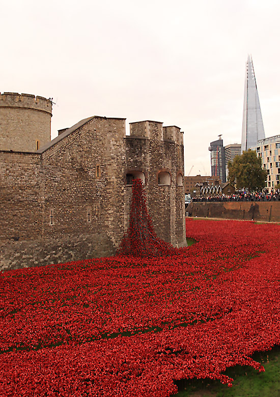 Tower Poppies 1682626