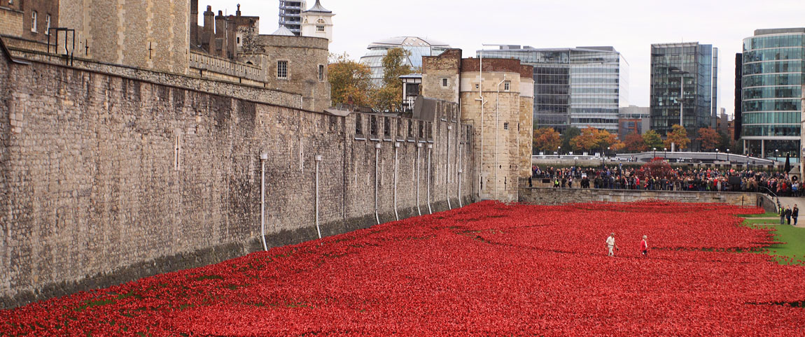 Tower Poppies 1685628