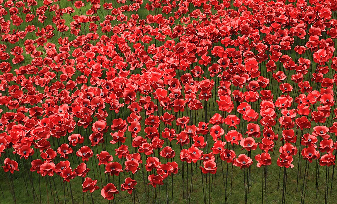 Tower Poppies 1723641