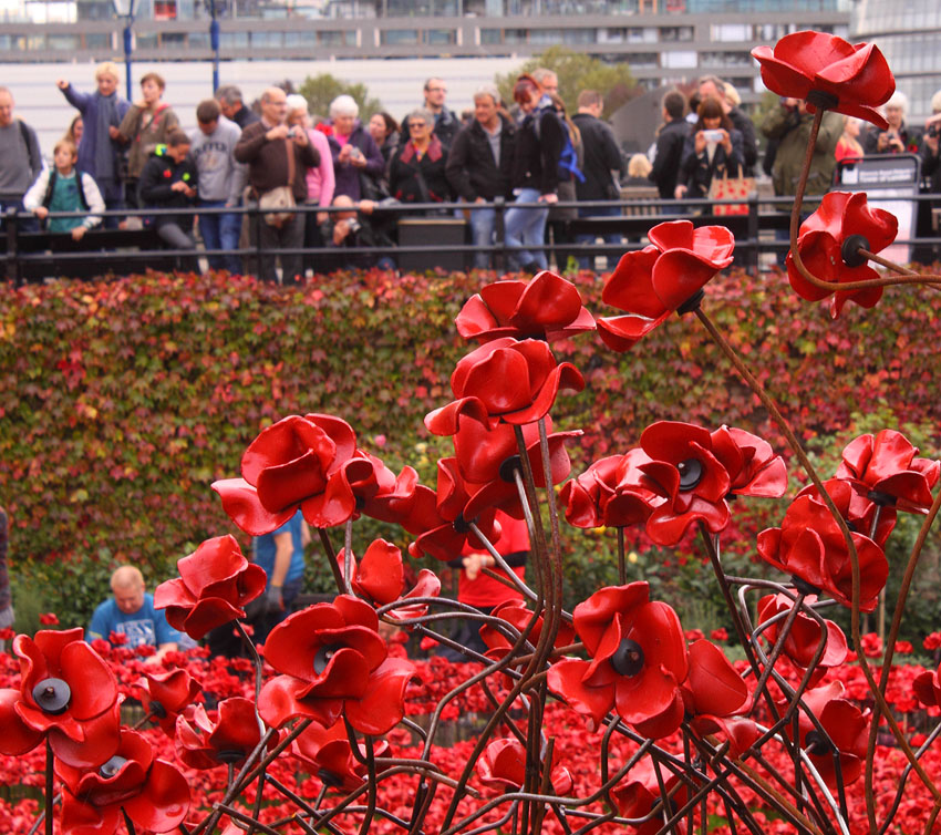 Tower Poppies 1727642