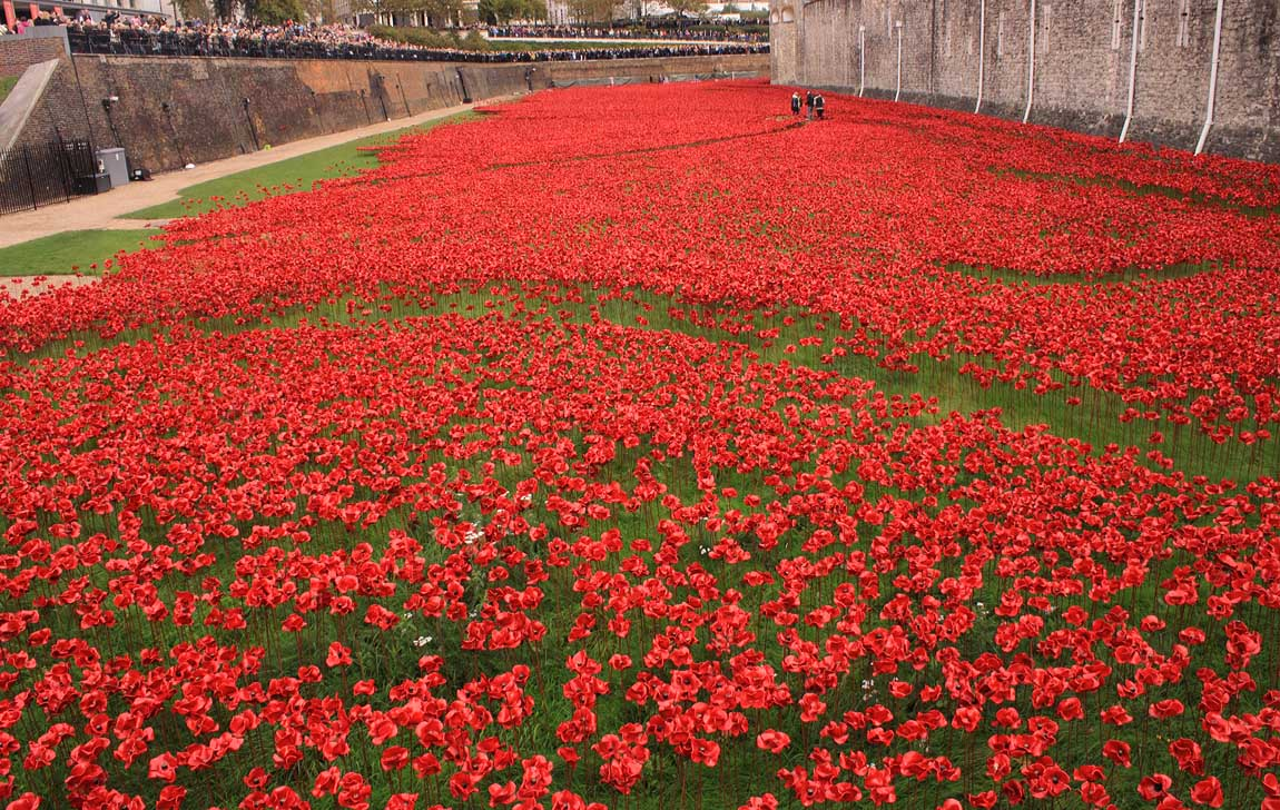 Tower Poppies 1732645