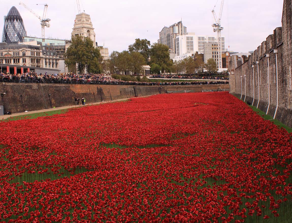 Tower Poppies 1742647