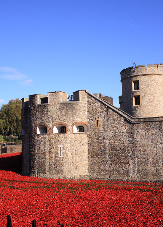 Tower Poppies 1918676