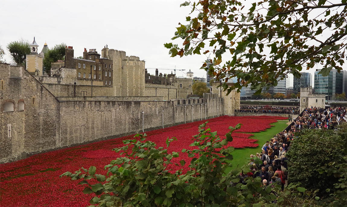 Tower Poppies 1973 HD679