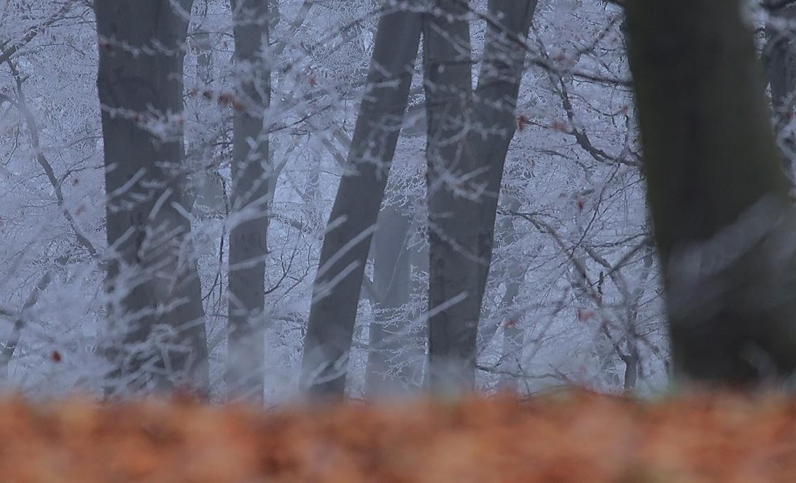 Frosty Wood 7709827