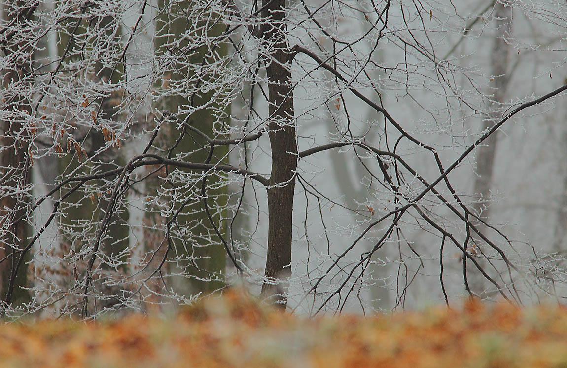 Frosty Wood 7711828