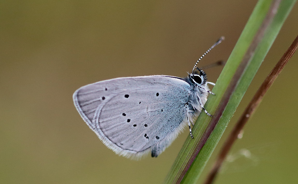 Small Blue_S1Q8354