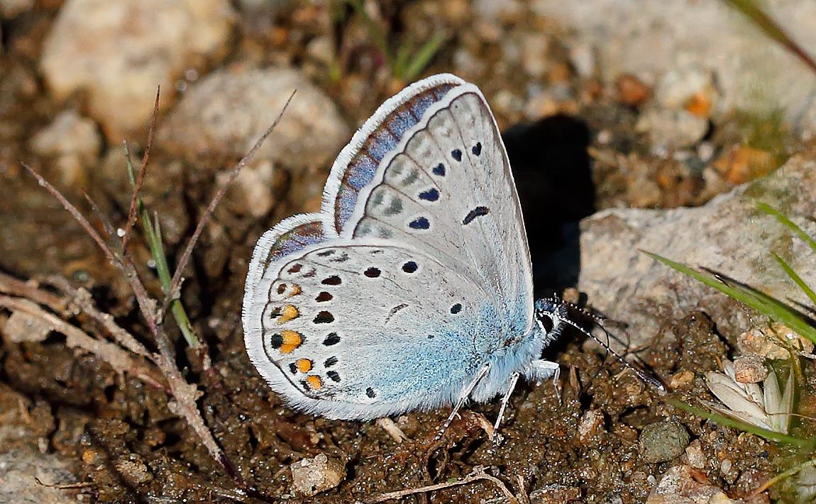 AMANDA'S BLUE_J4X6344