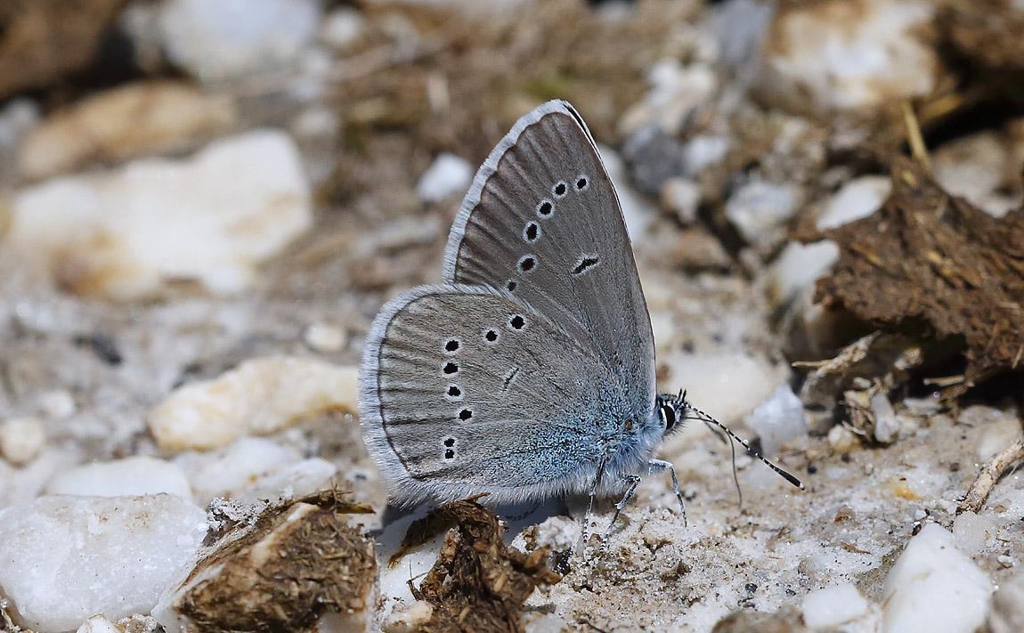 Mazarine Blue_J4X5288