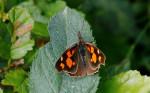 Bulgarian Butterflies 2015