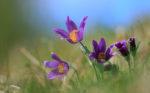A Rare Easter Flower