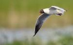 Local Birding at Willington
