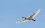 Spring Birding in Norfolk