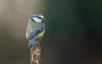 Just Common Birds